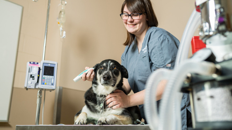 Enhanced supports for rural saskatchewan veterinary services